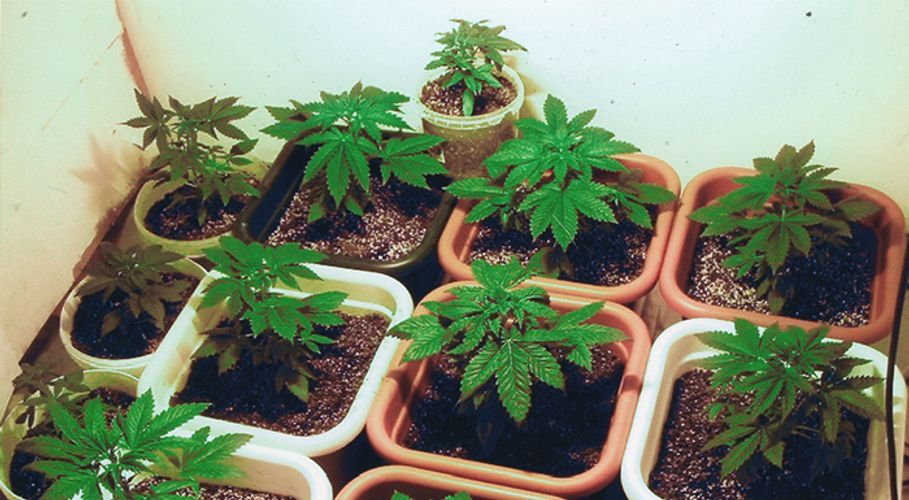 Here's How to Elevate Your In-Home Grow
