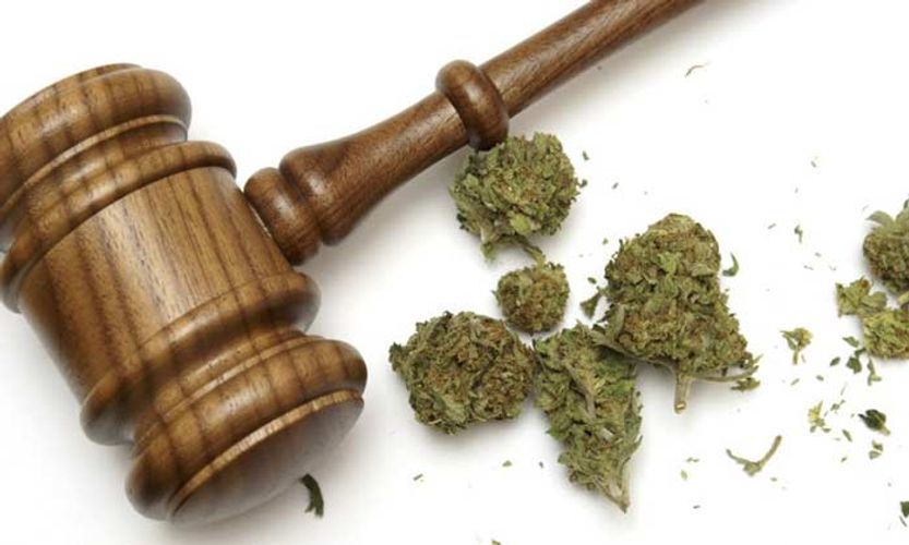 Federal Court Stands With Medical Marijuana Growers Against DEA