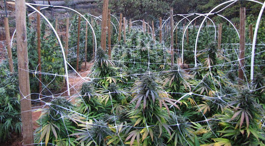 California's Calaveras County Considering Sweeping Ban on Cannabis Cultivation