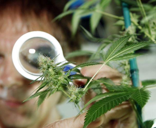 GW Pharmaceuticals Is Proving Cannabis Helps Cure Cancer