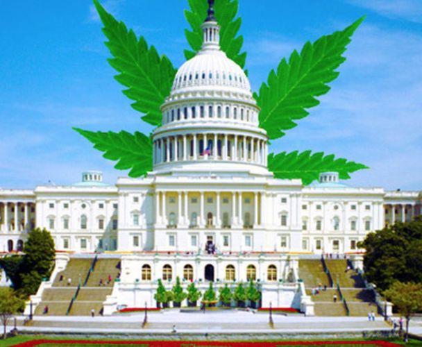 Virginia Representative Tom Garrett Pushes to Legalize Marijuana Nationwide