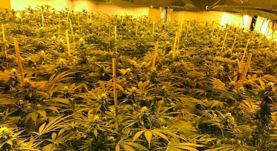British Police Seized A Million Dollars Worth of Weed In an '80s Nuke Shelter