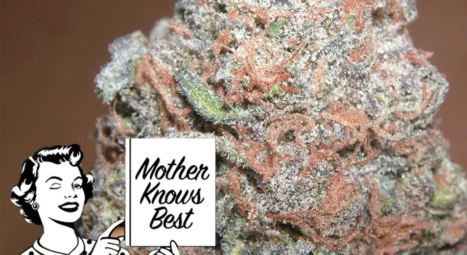 Mother Knows Best: Why Are Hybrid Strains So Awesome?