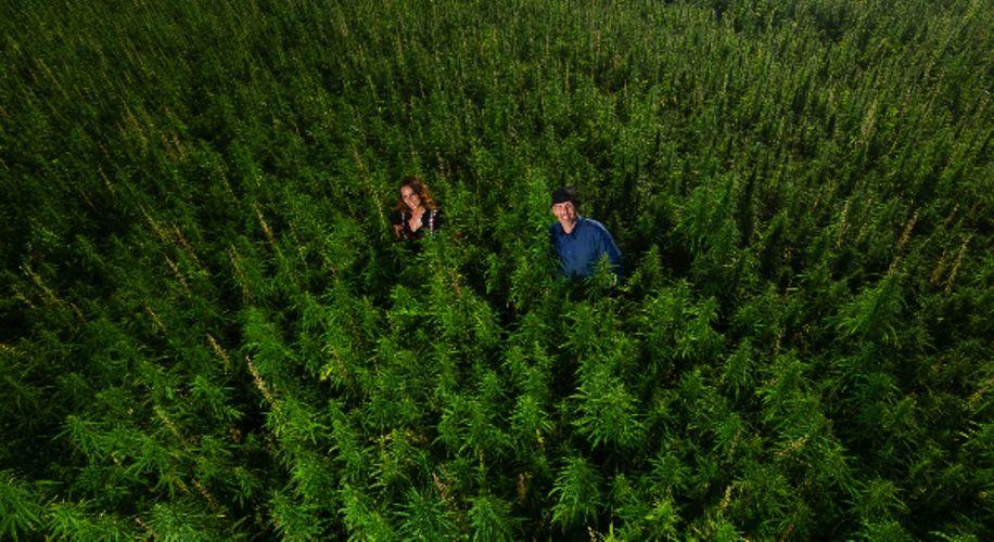 Switzerland's Cannabis Industry Is Booming Despite THC Ban