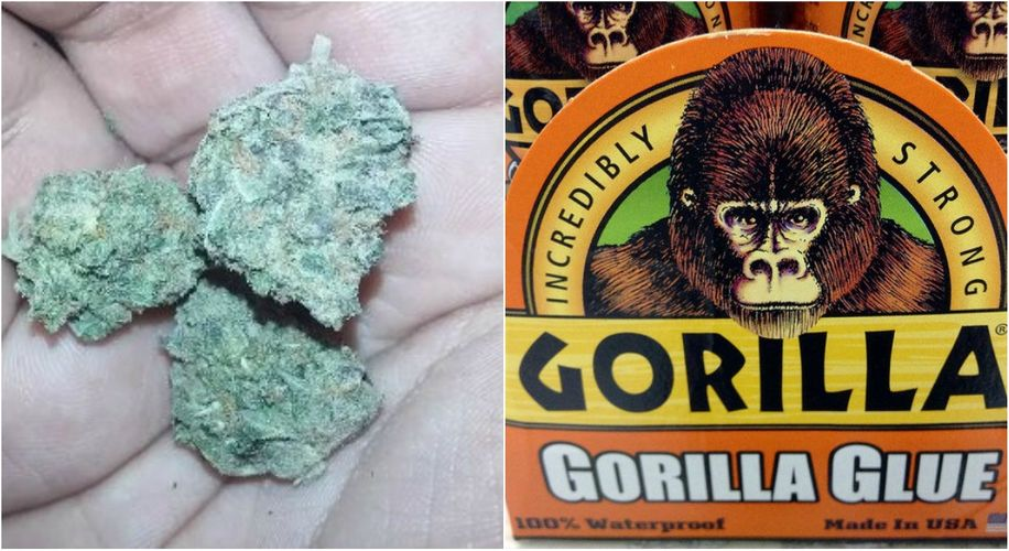 Gorilla Glue (the Glue) Is Suing the Company Behind Gorilla Glue (the Weed)
