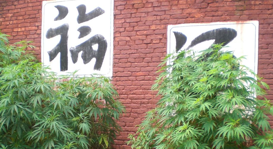 China Could Become a Major Player in the Cannabis Industry