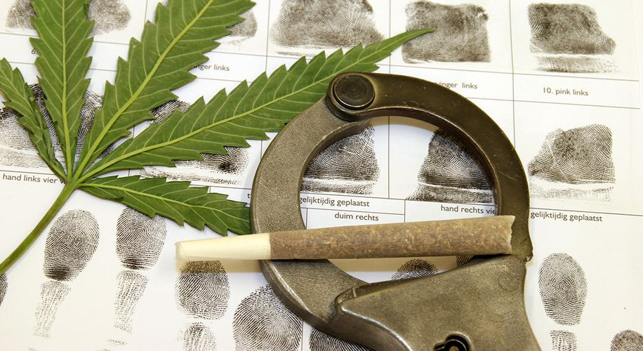 Mother Knows Best: Can I Call the Police if Someone Steals My Personal Cannabis Plants?