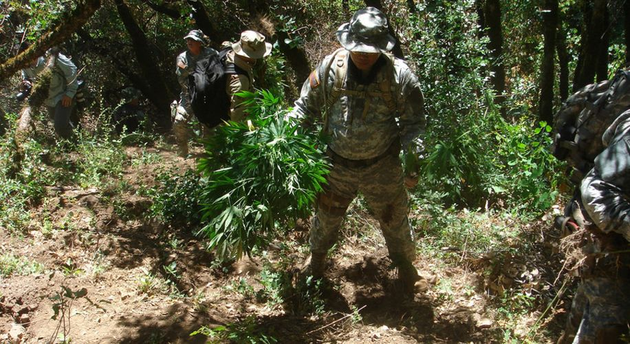 Feds Create Toxic Mess by Destroying Marijuana Grows