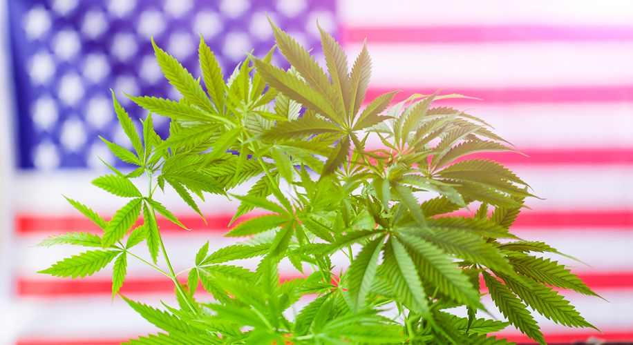 Over Two-Thirds of Americans Support Cannabis Legalization, New Poll Finds