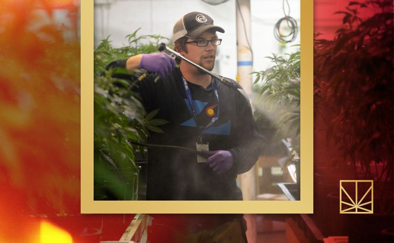 5 Pesticides Wrongfully Used in Cannabis Cultivation