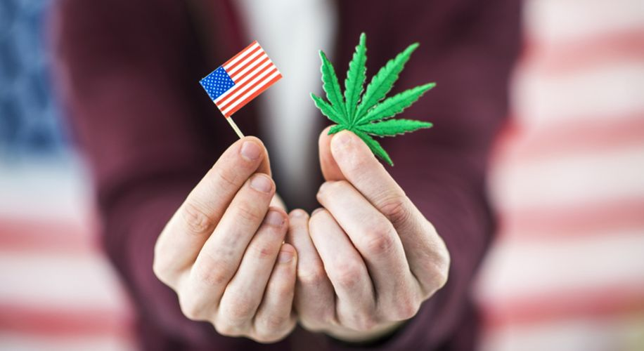 Weekly Weed News Roundup: Cannabis Wins Big at the Ballot Box