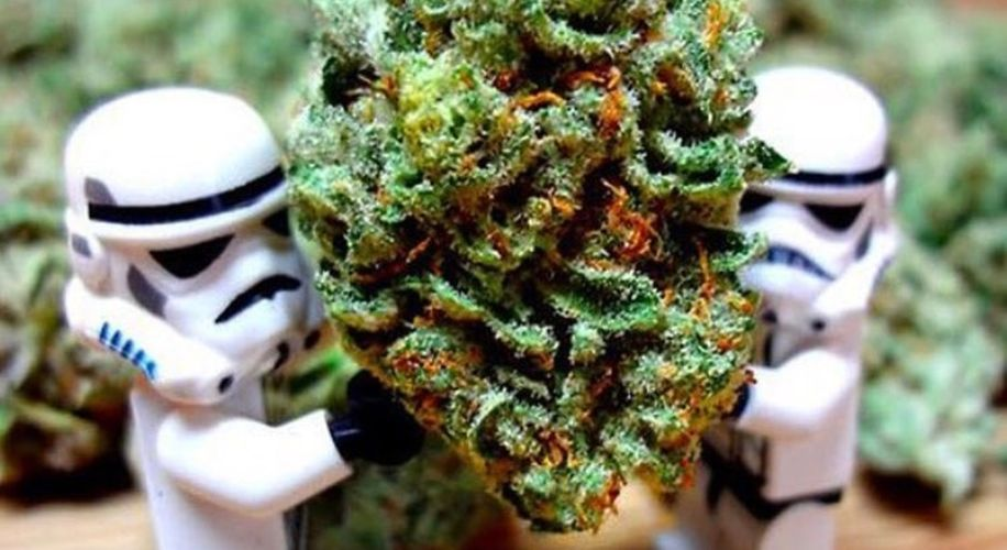 Does Yoda Vape? A Guide to How Each Star Wars MVP Consumes Weed