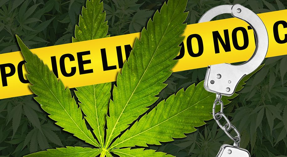 Federal and Local Police Team Up on Massive Black Market Pot Raid in Colorado