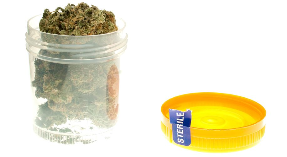 New Drug Testing Tech Will Help Cops Distinguish Weed From Hemp