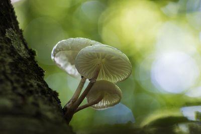 1565592757336_magic-mushrooms-psilocybin-stock.jpg