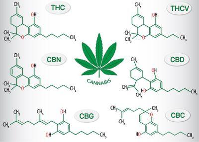 1570133604662_cannabinoids-1.jpg
