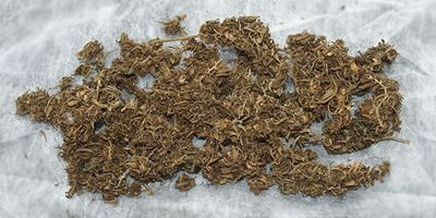 1572646149656_too-dry-weed.jpg