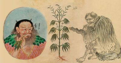 1572041016947_HISTORY_The_History_of_the_Agriculture_of_Cannabis_4k.jpg