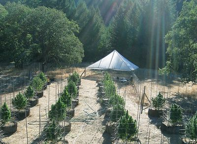 1572287126665_outside-farm-weed-nikki-swami-merry-jane.jpg