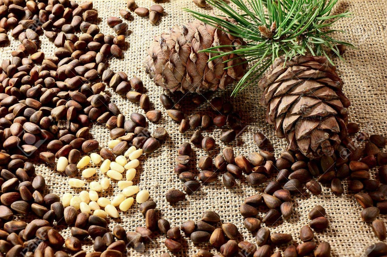 1573604056834_70069362-siberian-pine-nuts-and-branches.jpg