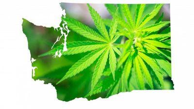 1575412441502_marijuana-washington.jpg