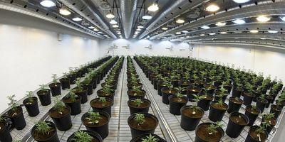 1576264086307_Tween-Marijuana-medical-1901016.t54106c1b.m800.x5f2d57e9-750x375.jpg