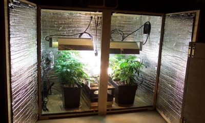 1578441484911_how-to-pick-the-right-size-grow-box-1.jpg