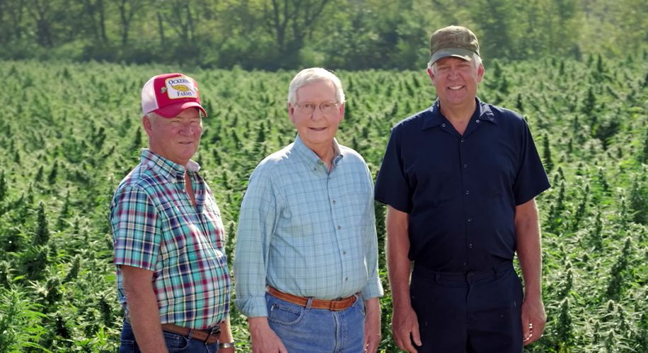 Mitch McConnell Looks Like a Narc in New Campaign Footage Featuring Hemp Farm
