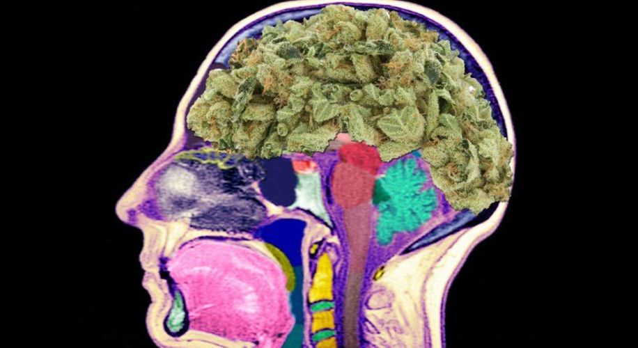 Cannabis Helps Protect HIV Patients' Brains From Deteriorating, Study Finds