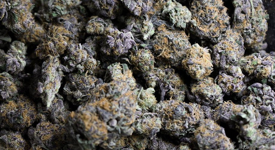 Florida Sold Over 22,000 Pounds of Weed Flower in Under 6 Months