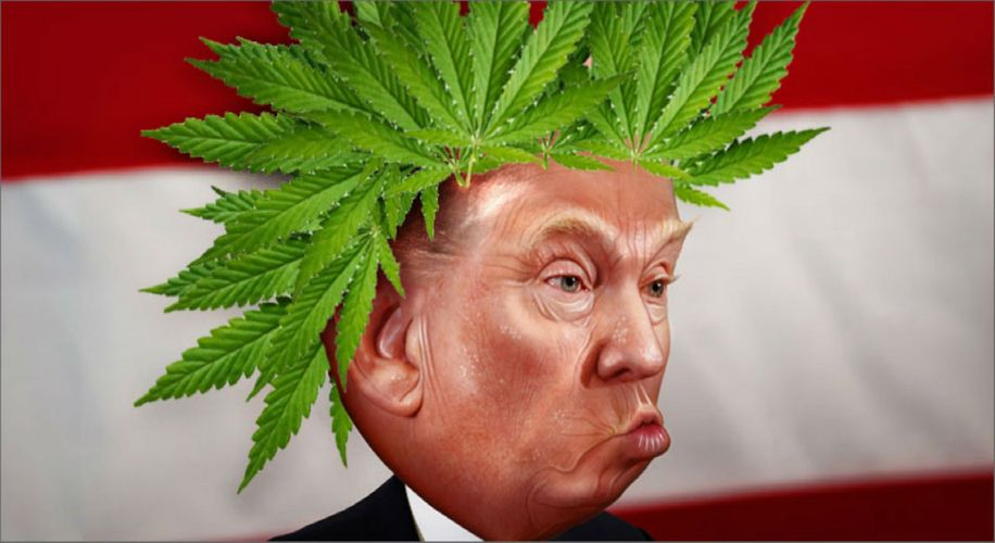 Trump's New Budget Proposal Will Cause Chaos for Medical Marijuana Patients