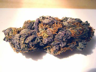 1583785465356_Purple-Princess.jpg