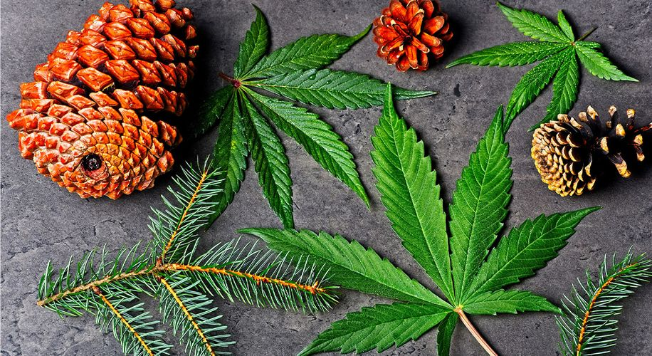 What Is Pinene and What Does This Cannabis Terpene Do?