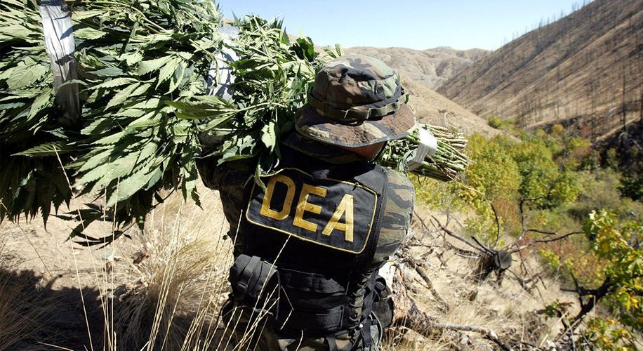 """Doctor Sues the DEA Over a """"Secret Law"""" Blocking Cannabis Research"""