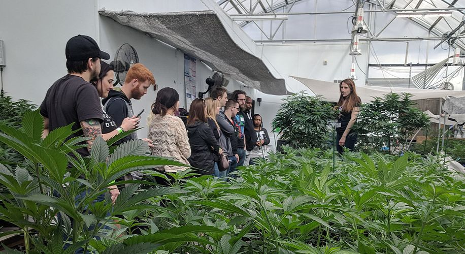 Colorado's Pot Industry Is Expected to Take a Big Plunge, Thanks to COVID-19
