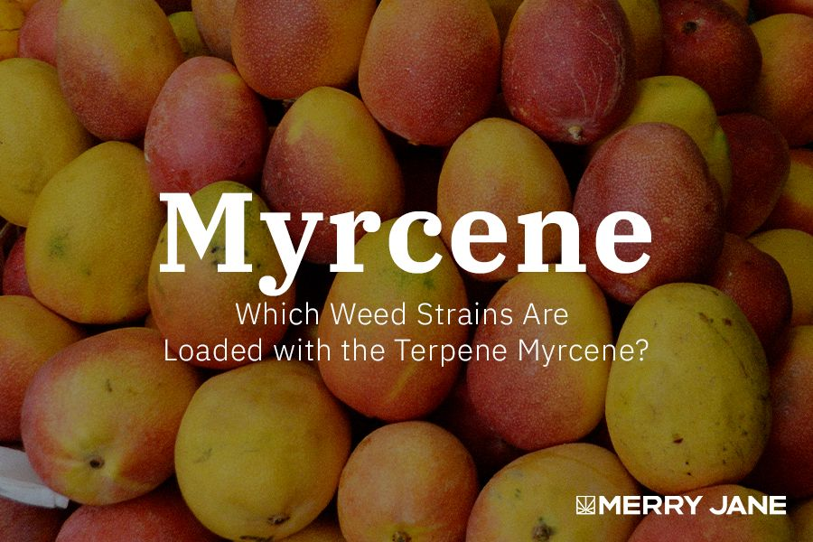 Which Weed Strains Are Loaded with the Terpene Myrcene?