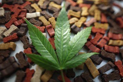 1618604080266_05-honest-paws-cbd-oil-dog-treats-weed-marijuana-leaf-merry-jane.jpg
