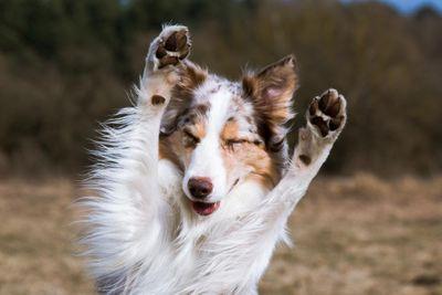 1618604145188_06-honest-paws-cbd-oil-dogs-merry-jane.jpg