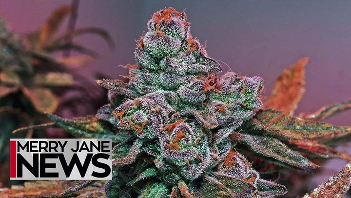 5 Predictions for the Future of Weed | MERRY JANE News